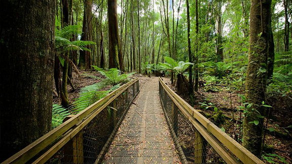 Mt Field National Park walkway